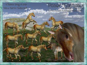 Horse Gabal Set01