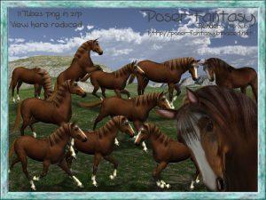 Horse Garlic Set01