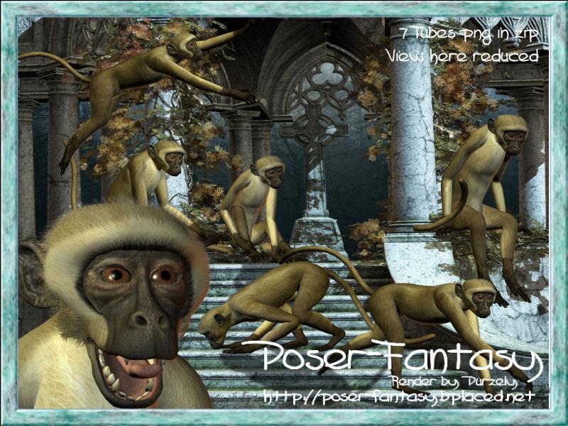 Monkey Set 01